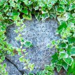ガーデン用品屋さんの花図鑑 アイビー