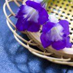 ガーデン用品屋さんの花図鑑 アサリナ