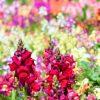 ガーデン用品屋さんの花図鑑 アスチルベ