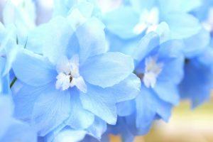ガーデン用品屋さんの花図鑑 デルフィニウム