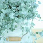 ガーデン用品屋さんの花図鑑 ディコンドラ