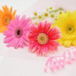 ガーデン用品屋さんの花図鑑 ガーベラ