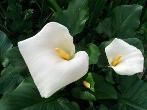 ガーデン用品屋さんの花図鑑 カラー