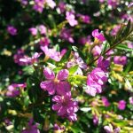 ガーデン用品屋さんの花図鑑 クフェア