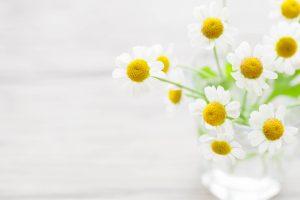 ガーデン用品屋さんの花図鑑 マトリカリア