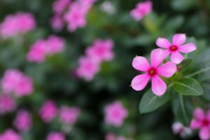ガーデン用品屋さんの花図鑑 オキザリス