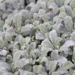 ガーデン用品屋さんの花図鑑 タナセツム